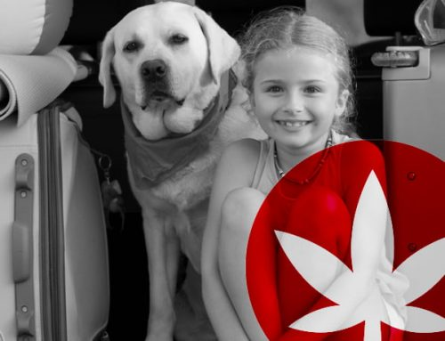Travelling With Your Pet? Don't Forget CBD!