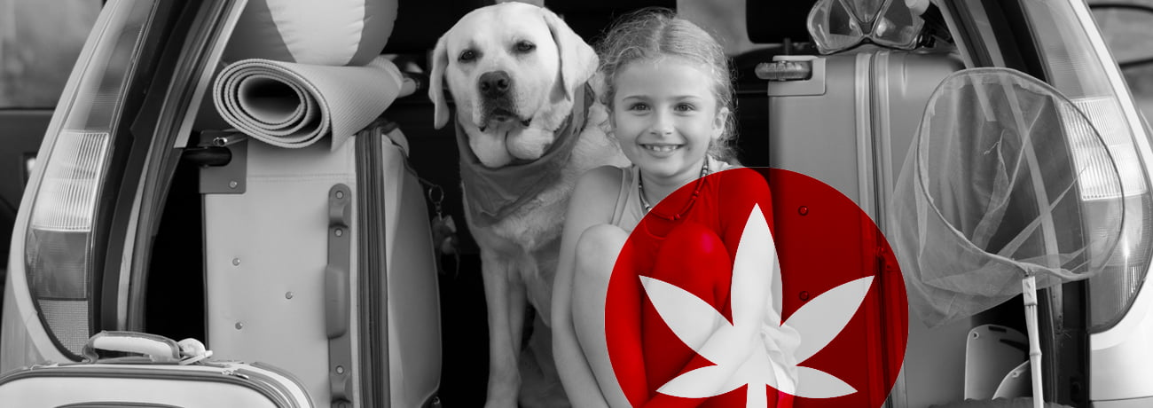 Travelling With Your Pet? Don't Forget CBD! - Holiday - Travelling With Your Pet? Don't Forget CBD!