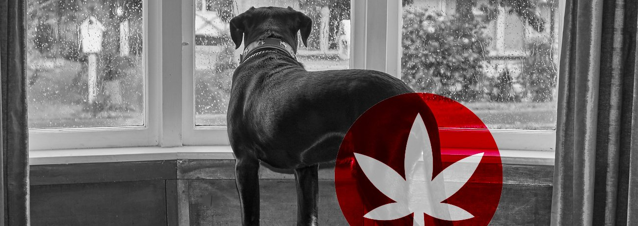 How CBD Eases Anxiety And Stress In Dogs And Cats - Lonely - How CBD Eases Anxiety And Stress In Dogs And Cats